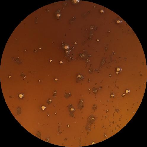 PhytoPure Hemp