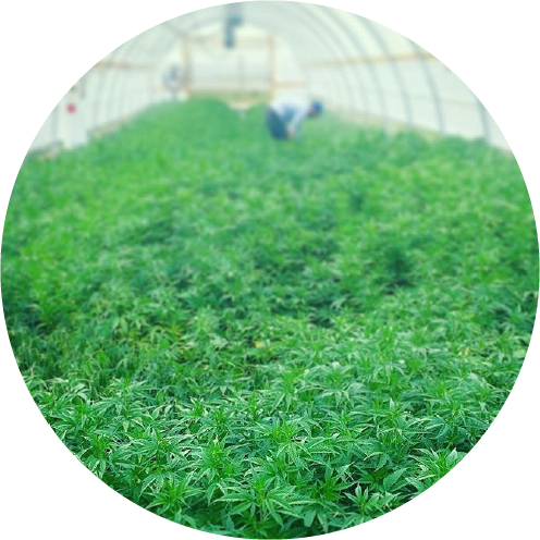 about hemp extract